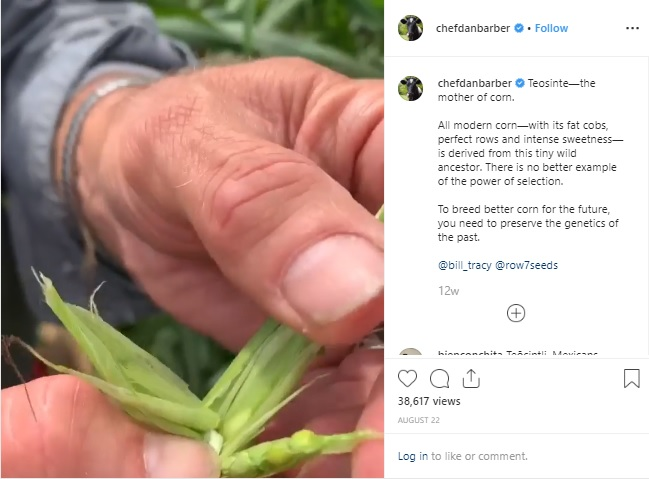 Chef Dan Barber Instagram Feed on corn's ancestor
